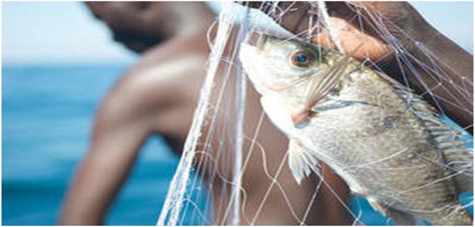 تقرير لمنظمة الأغذية والزراعة للأمم المتحدة يلقي الضوء على الدور المتنامي للأسماك في إشباع احتياجات العالم الغذائية.
