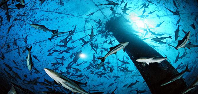 تقرير لمنظمة الأغذية والزراعة للأمم المتحدة حول حالة الموارد السمكية وتربية الأحياء المائية في العالم 2014.