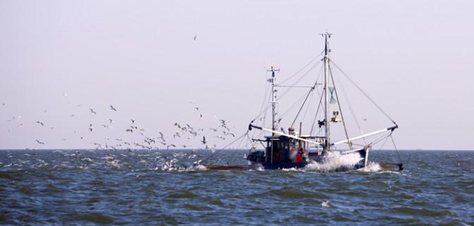 إصدار قرارات لوزير الفلاحة والصيد البحري المتعلقة بتنظيم الصيد في بعض المصايد.
