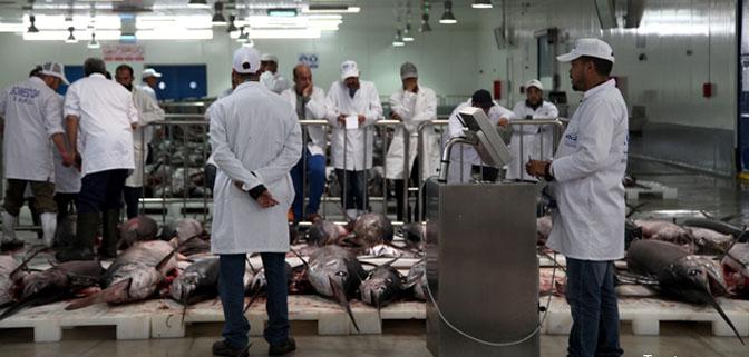سوق السمك الجديد بطنجة يباشر انشطته في اجواء مريحة للمهنيين.