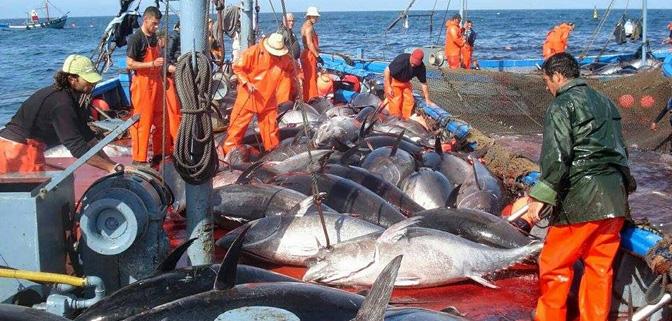 المغرب في الرتبة 13 ضمن أكبر الدول المنتجة للأسماك.