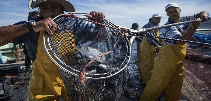 مشروع الحماية الاجتماعية ( يستهدف البحارة ومهنيو مقاولات الصيد البحري والأحياء المائية)